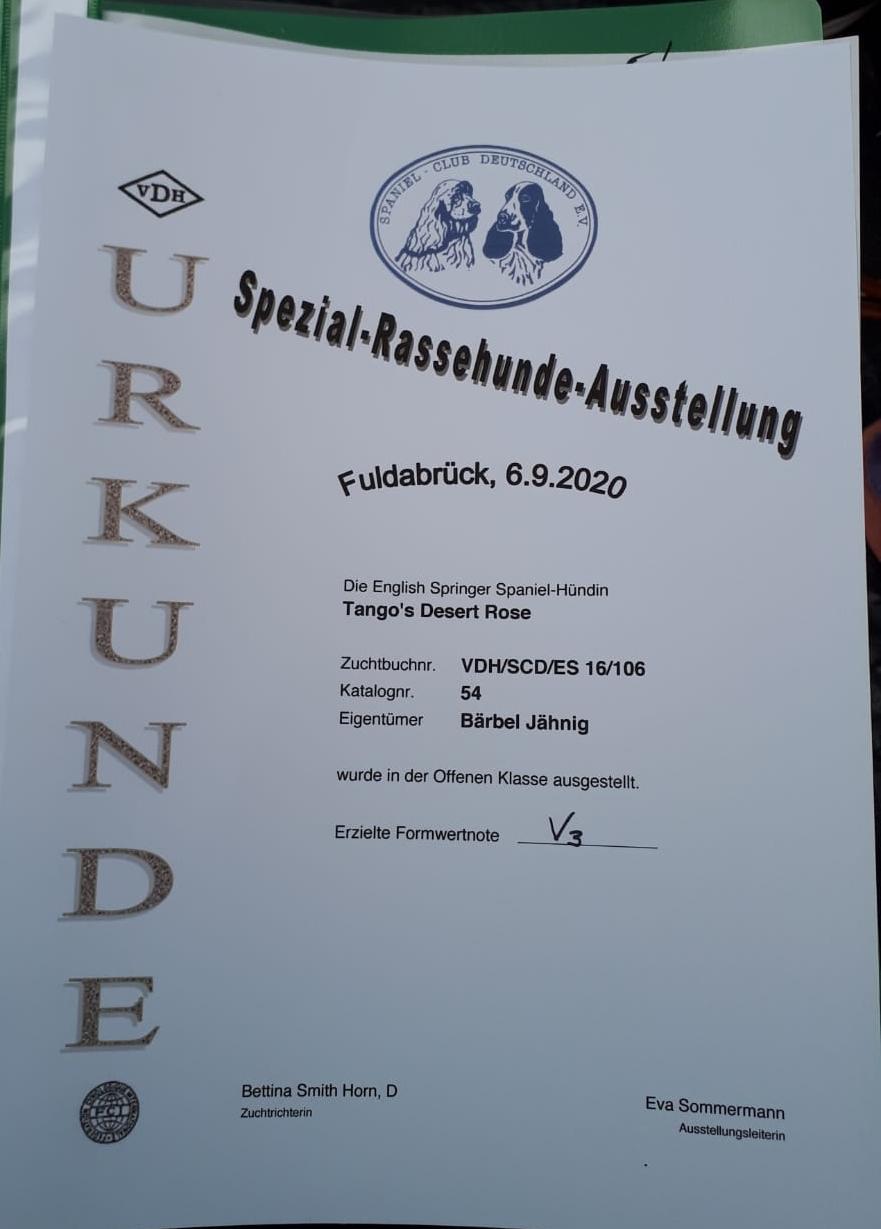 Rose-Ausstellung-sie-erhielt-das-V3in-Fuldabrueck